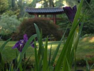 Japanischer Garten 111 Orte in Leverkusen